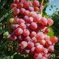 termek2269/flamingo-csemegeszolo-2269-575186492-1200.jpg / Flamingó csemegeszőlő