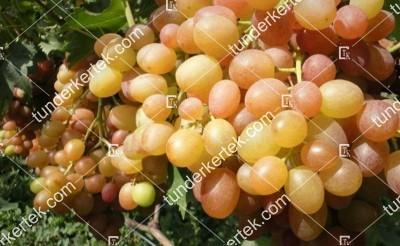 Kaméleon csemegeszőlő