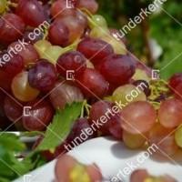 termek2275/kismis-velesz-csemegeszolo-2275-1362163535-1200.jpg / Kismis velesz csemegeszőlő