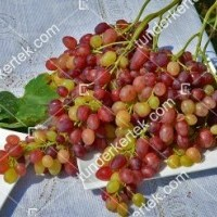 termek2275/kismis-velesz-csemegeszolo-2275-1648420253-1200.jpg / Kismis velesz csemegeszőlő