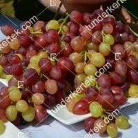 termek2275/kismis-velesz-csemegeszolo-2275-1793865846-1200.jpg / Kismis velesz csemegeszőlő