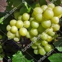 termek2289/tuzlovszkij-velikan-csemegeszolo-2289-321594791-1200.jpg / Tuzlovszkij velikan csemegeszőlő