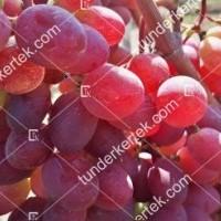 termek2295/pamjati-bujenko-csemegeszolo-2295-23530124-1200.jpg / Pamjati ucsitelja csemegeszőlő