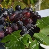 termek2296/velika-csemegeszl-2296-639794644-1200.jpg / Velika csemegeszőlő