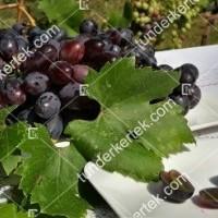 termek2296/velika-csemegeszl-2296-819801144-1200.jpg / Velika csemegeszőlő