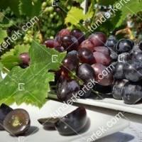 termek2296/velika-csemegeszl-2296-995803278-1200.jpg / Velika csemegeszőlő