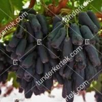 termek2301/avatar-csemegeszolo-2301-1963965346-1200.jpg / Avatar csemegeszőlő