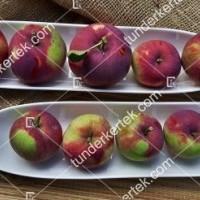 termek2305/eva-szeru-alma-2305-1110415349-1200.jpg / Éva-szerű lila alma