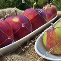 termek2305/eva-szeru-alma-2305-1652872881-1200.jpg / Éva-szerű lila alma