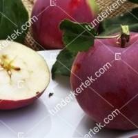 termek2305/eva-szeru-alma-2305-1690334016-1200.jpg / Éva-szerű lila alma