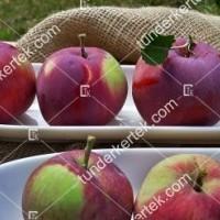 termek2305/eva-szeru-alma-2305-1695925854-1200.jpg / Éva-szerű lila alma