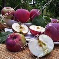 termek2305/eva-szeru-alma-2305-1805394956-1200.jpg / Éva-szerű lila alma
