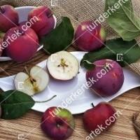 termek2305/eva-szeru-alma-2305-1909027936-1200.jpg / Éva-szerű lila alma