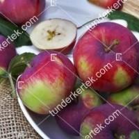 termek2305/eva-szeru-alma-2305-1913231185-1200.jpg / Éva-szerű lila alma