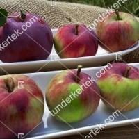 termek2305/eva-szeru-alma-2305-441188758-1200.jpg / Éva-szerű lila alma