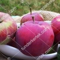 termek2305/eva-szeru-alma-2305-771445138-1200.jpg / Éva-szerű lila alma