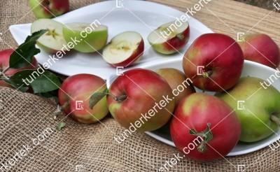 Fóti hosszúkás alma