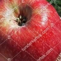 termek2338/crimson-snow-alma-2338-1417065377-1200.jpg / Crimson Snow® alma
