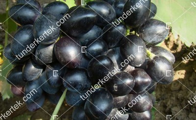Fursetnij csemegeszőlő