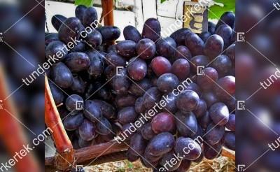 Karmen csemegeszőlő