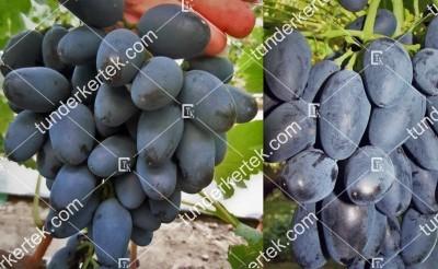 Rada csemegeszőlő