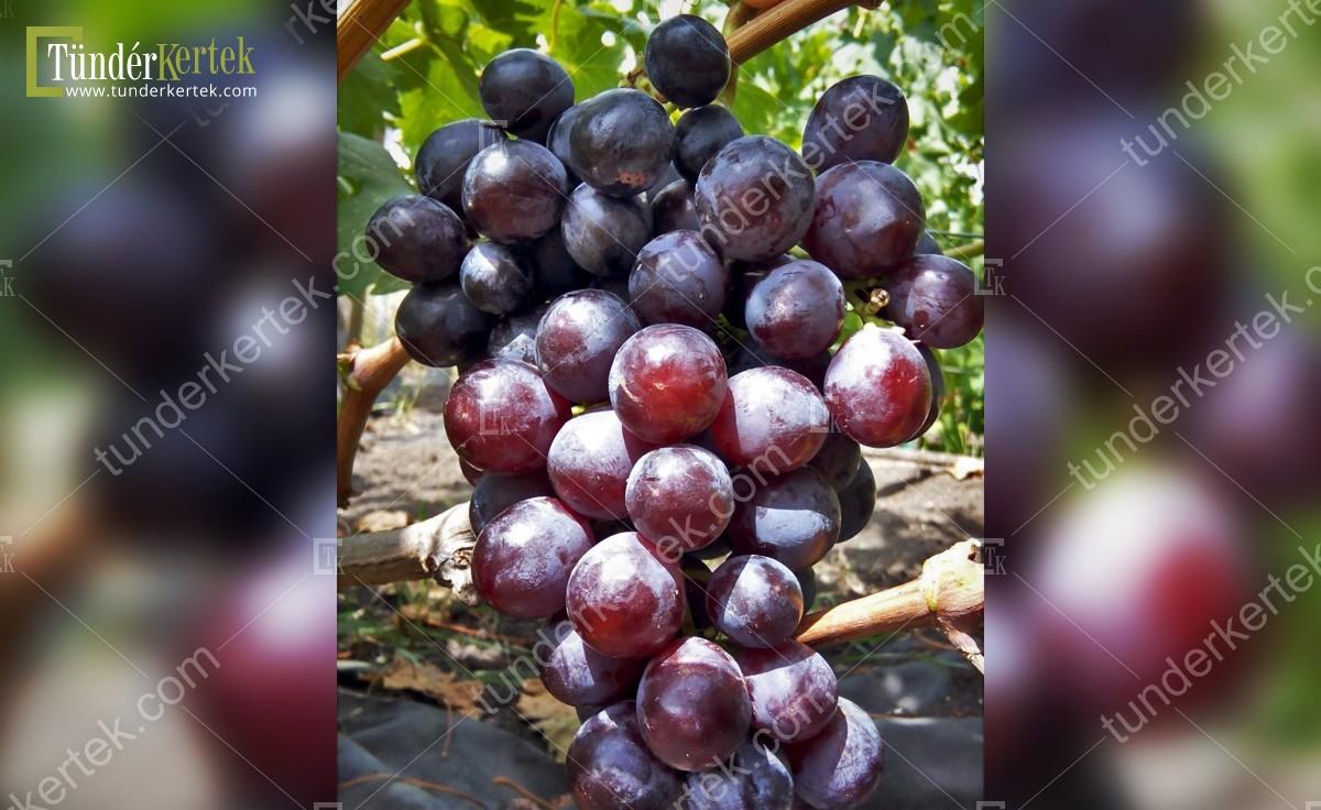 Rosfor csemegeszőlő