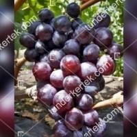 termek2373/rosfor-csemegeszolo-2373-1010409976-1200.jpg / Rosfor csemegeszőlő