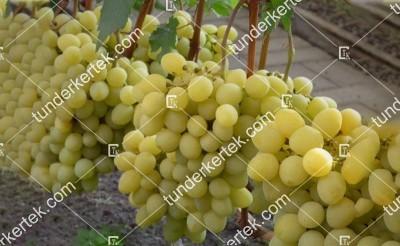 Valek csemegeszőlő