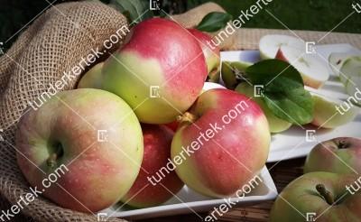 Hóbélű alma