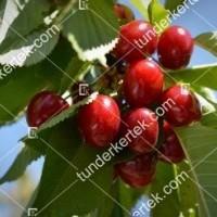 termek246/botond-246-1053932368-1200.jpg / Botond cseresznye