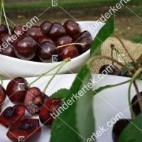 termek252/hedelfingeni-orias-252-242515951-1200.jpg / Hedelfingeni óriás cseresznye