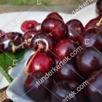 termek252/hedelfingeni-orias-252-378037199-1200.jpg / Hedelfingeni óriás cseresznye