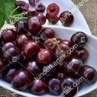 termek252/hedelfingeni-orias-252-853420316-1200.jpg / Hedelfingeni óriás cseresznye