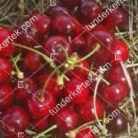 termek257/korai-cseresznye-tamasi-257-728172873-1200.jpg / Korai cseresznye (Tamási)