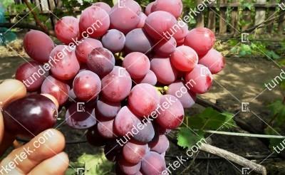 Faeton csemegeszőlő