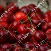 termek261/rita-261-181509397-1200.jpg / Rita