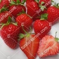 termek2654/harmony-szamoca-2654-1662818150-1200.jpg / Harmony® szamóca