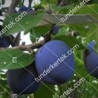termek295/fajszi-kek-295-1609062160-1200.jpg / Fajszi kék