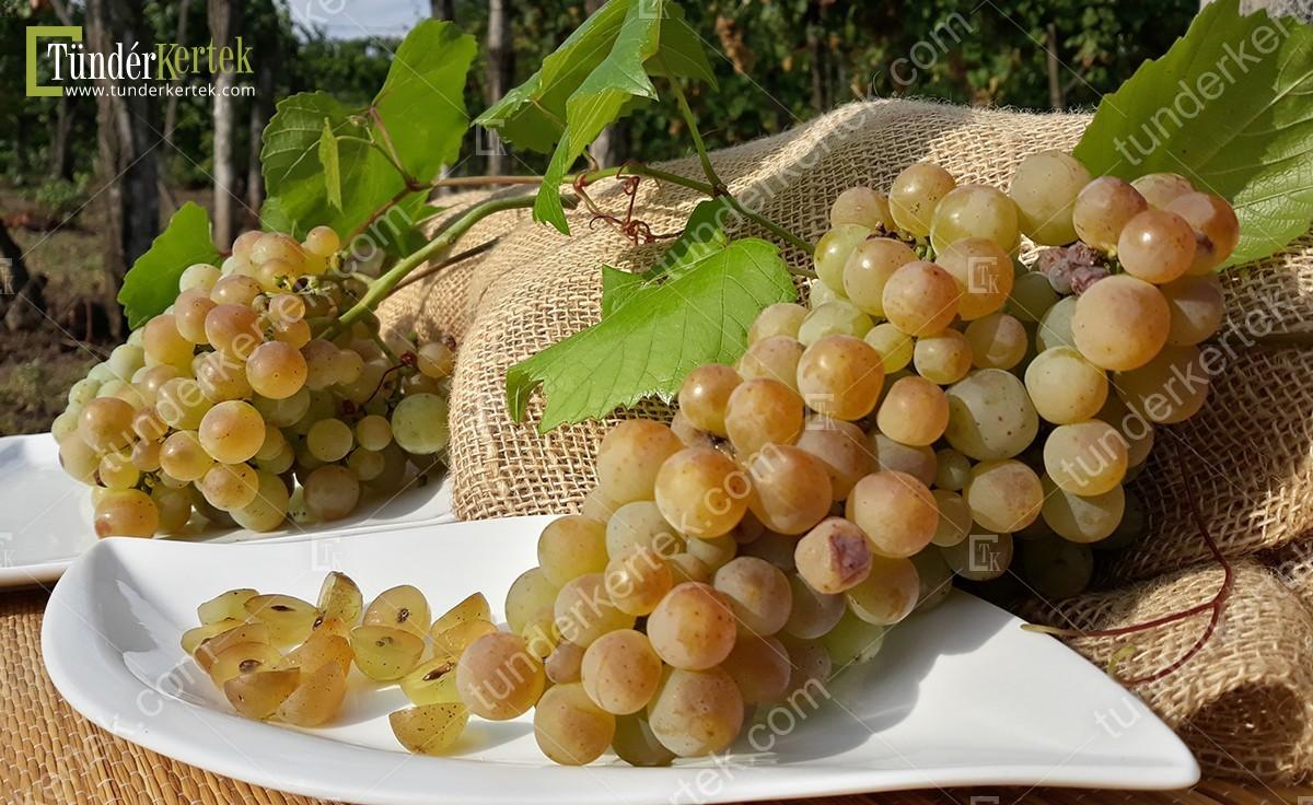 Zalagyöngye csemegeszőlő