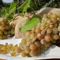 termek341/zalagyongye-csemegeszolo-341-1003841701-1200.jpg / Zalagyöngye csemegeszőlő