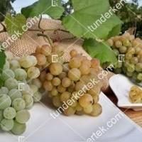 termek341/zalagyongye-csemegeszolo-341-1288490666-1200.jpg / Zalagyöngye csemegeszőlő