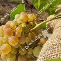 termek341/zalagyongye-csemegeszolo-341-1457081996-1200.jpg / Zalagyöngye csemegeszőlő