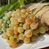 termek341/zalagyongye-csemegeszolo-341-1658645776-1200.jpg / Zalagyöngye csemegeszőlő