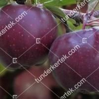 termek343/arkansasi-fekete-alma-343-273602814-1200.jpg / Arkansasi fekete alma