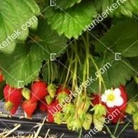 termek349/roxana-szamoca-349-397510075-1200.jpg / Roxana szamóca