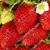 termek349/roxana-szamoca-349-736308506-1200.jpg / Roxana szamóca