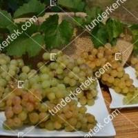 termek366/csabagyongye-366-1852777496-1200.jpg / Csabagyöngye
