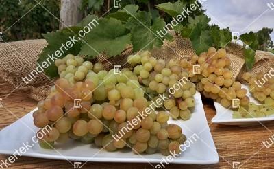 Csabagyöngye szőlő