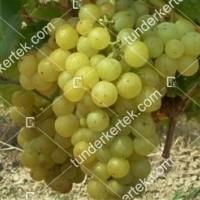 termek368/favorit-368-558963939-1200.jpg / Favorit csemegeszőlő