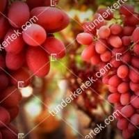 termek383/crimson-seedless-383-1484713884-1200.jpg / Crimson seedless